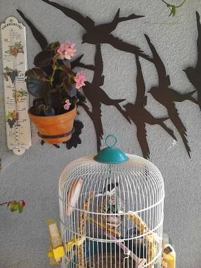 oiseauxx