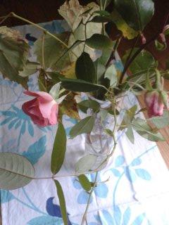 rose automne