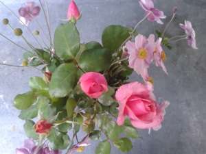 roses anémones 1 (1)