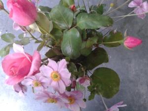 roses anémones 1 (2)