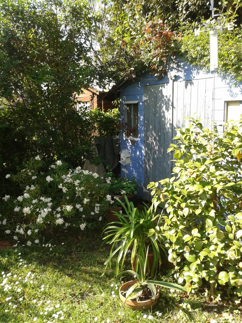 cabane entourée d'un Oranger du Mexique Aztec Pearl, d'un camélia, des rosiers, d'une agapanthe....