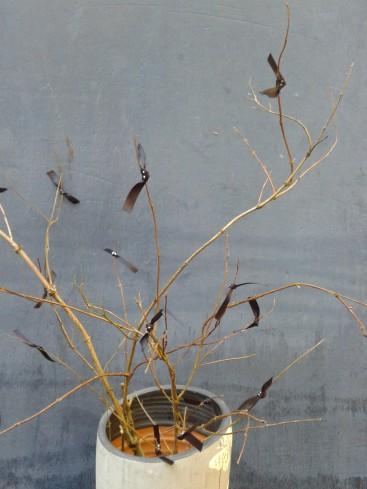 hallo arbre chauve souris