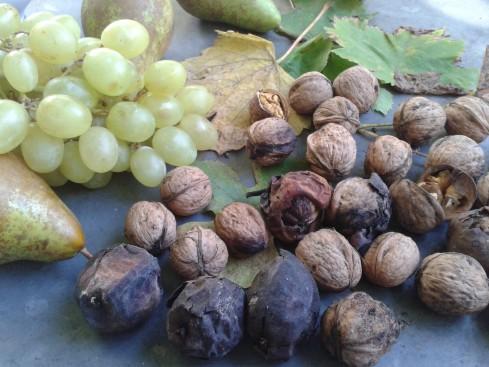 raisins noix