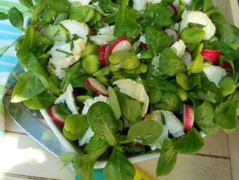 salade fèves radis mâche chèvre
